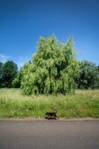Natuurgebied Bretten Boom - Ontspanning - UPtown Sloterdijk
