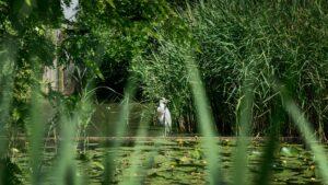 Natuurgebied Bretten Reiger - Ontspanning - UPtown Sloterdijk